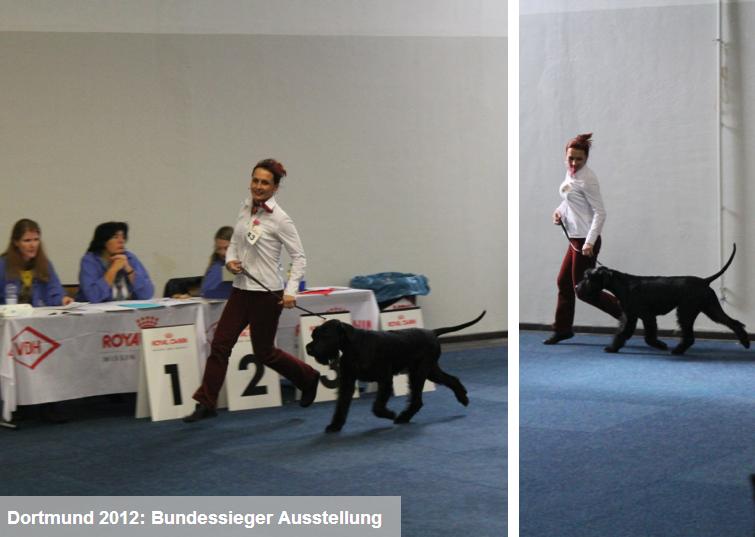 Bilder von der Ausstellung in Dortmund vom 13.10.2012