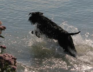 """Montez Lola von Ermada"" springt ins Meer!"