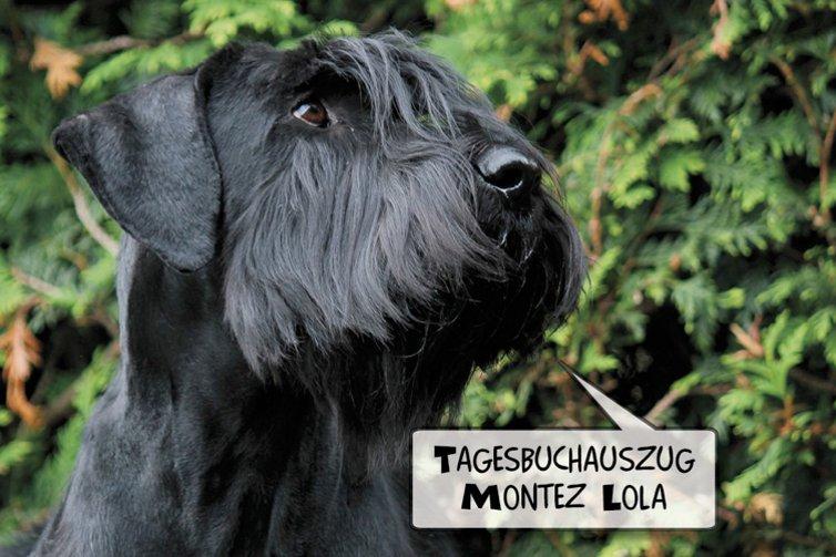 """Riesenschnauzer """"Montez Lola von Ermada"""""""